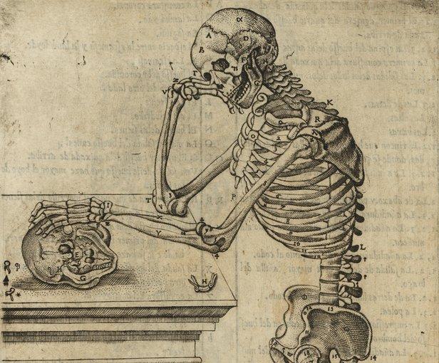 esqueleto historia